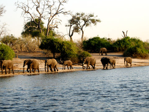 Chobe Safari Package Photos