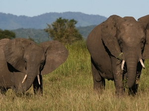 Weekend Getaway Safari Photos