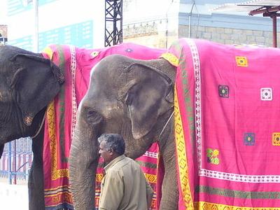 Elephants Welcoming Lord Srinivasa