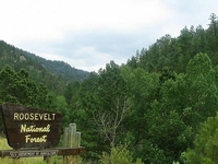 Roosevelt National Forest
