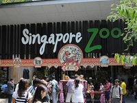 Singapore Zoo