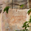 Extinct Tasmanian Tiger