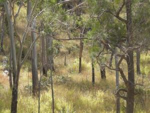 Mount Archer National Park