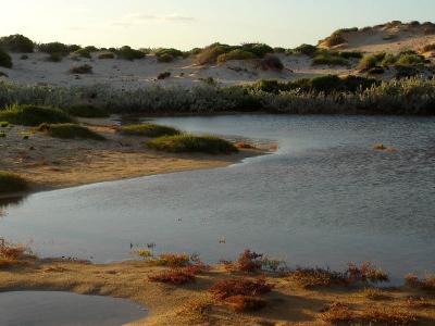 Cape Range Landscape