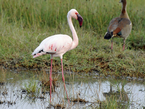 Massai Mara Game Reserve, Lake Nakuru Photos