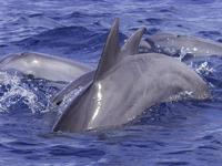 3 Day Zanzibar Dolphins, Stone Town, Jozani, Spice Tour