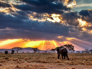 Fantastic Safaris To Tanzania Photos