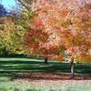 John A. Finch Arboretum