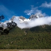 Fiordland Forests & Mountains - South Island NZ