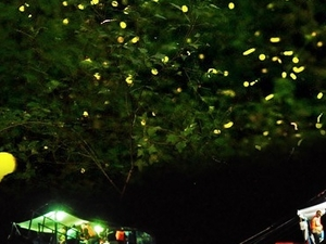 Firefly Watching in Palawan
