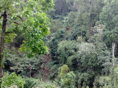 Forest In  Mondulkiri