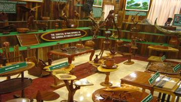 Forest Museum Near Saddle Peak
