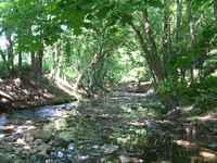 Frankford Creek