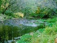Franklin Creek State Natural Area