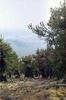 Fremont Peak View Through A Grove