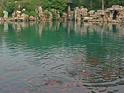 Five Dragon Pool