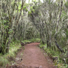 Forest In Marangu Route