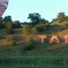 Gaisa Balons