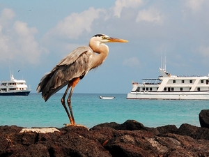 Galapagos Travel Deals
