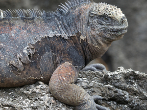 Galapagos Island Hopping 4 Days