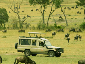 Selous Game Reserve And Dar Es Salaam City Tour