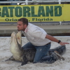 Gatorland Play