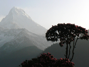 Ghorepani Poon Hill Trekking Photos