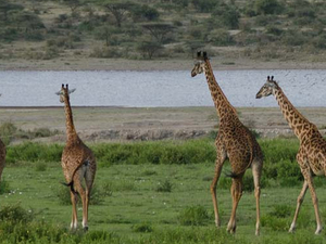 Safari Kenya and Tanzania Photos