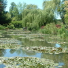 Giverny Nympheas