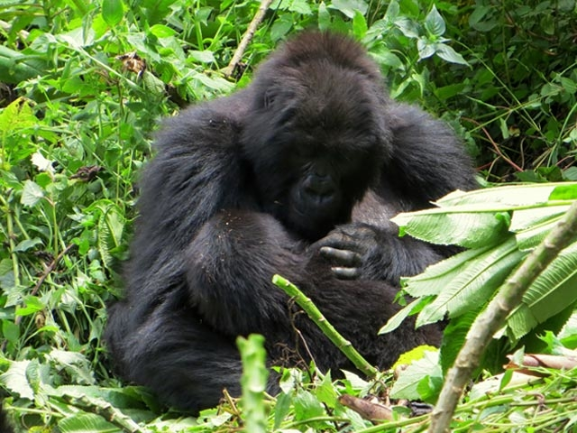 5 DAYS Bwindi - Gorilla & Queen Elizabeth Safari Photos