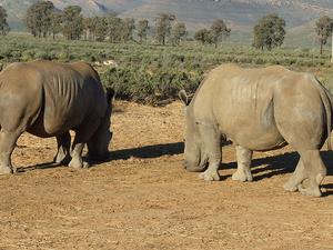 Aquila Game Reserve Wildlife Safari From Cape Town Photos