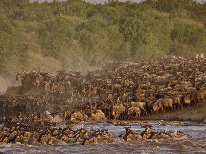 Masai Mara Migration 2014! Photos