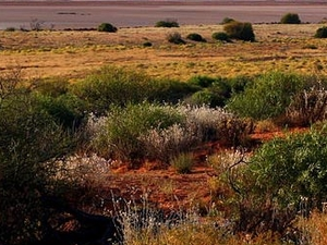 Great Victoria Desert