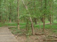 Greenbelt National Park