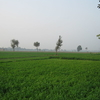 Green Farms Of Jats