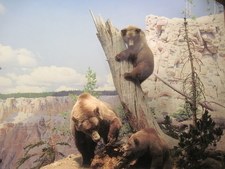 Grizzly Bear Diorama