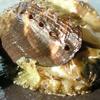 Guimaras Sea Snail