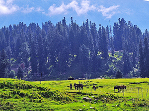 6 Nights 7 Days Kashmir Photos
