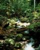 Gunung Mulu - Sarawak's Largest National Park