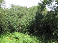 Glebelands Local Nature Reserve