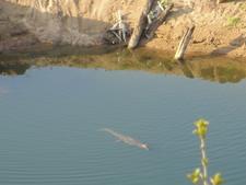 Makokwani Pools