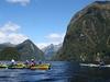 Hall Arm @ Doubtful Sound - Southland NZ