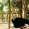 Hanoi Zoological Garden