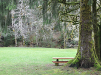 H B Van Duzer Forest State Scenic Corridor