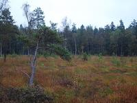 Heidenreich Moor Nature Reserve
