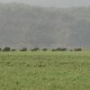View Of Rajaji National Park
