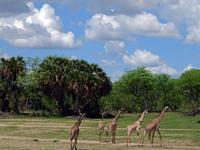 Selous Safari Package