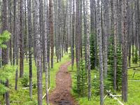 Hermitage Point Trail