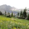 Hidden Meadow Trail