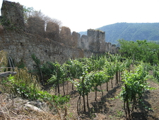 High Culture Vine Training In Wachau